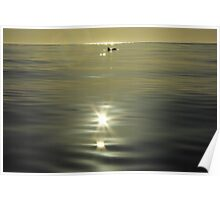 solitary dolphin in the sunlight Poster