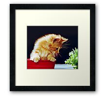 Cat On Red Tin Framed Print