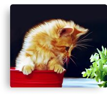 Cat On Red Tin Canvas Print