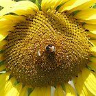 Sunflower bee me by Jen Bullen