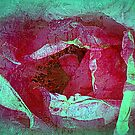 Texture Pink Rose by saseoche