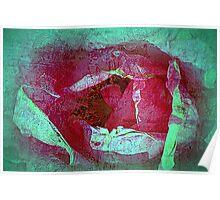 Texture Pink Rose Poster