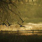 Flight Over Field by KatsEyePhoto