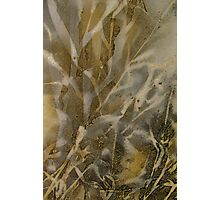 The Beauty of Corn Photographic Print