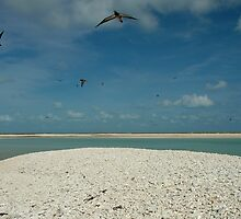 Flying Free - Adele Island Nature Reserve by Pamela Jennings