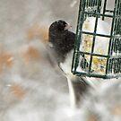 Fluttery Feather Blur by Bonnie Robert