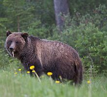 A Brown bear pulling up daisies by Inksphoto