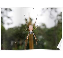 Golden Orb Web Weaving Spider at Mt Coot-tha Poster