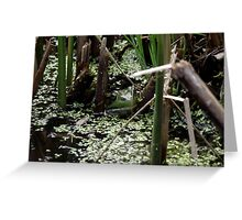 Hello froggy Greeting Card