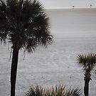 Peaceful Palm by luvinmynikon