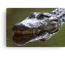 Alligator Grin Canvas Print