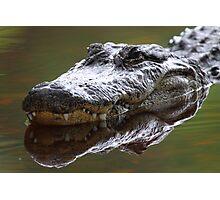 Alligator Grin Photographic Print