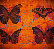 Lepidoptera collection by vampvamp