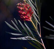 Hawaiian Flower by Inksphoto
