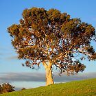 One Tree Hill by Michelle  Wrighton