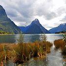 Milford Sound. South Island. New Zealand by Ralph de Zilva