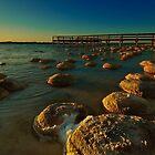 """Lake Clifton Thrombolites"" by Heather Thorning"