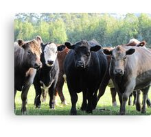 Mad cows Canvas Print