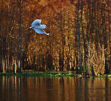 Quiet Flight by Alison M