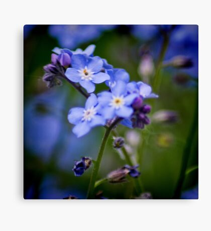Wood Forget Me Not Canvas Print