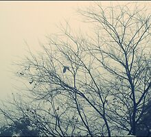 fog! in islamabad 3rd january 2011 morning! by anum altaf
