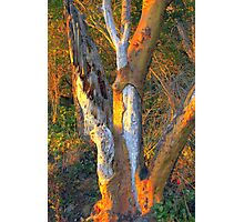 Warm Touch of Sunlight on Bark Photographic Print