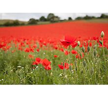 Poppy Field in the Spring Photographic Print