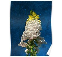 White Foxglove flowers on texture Poster