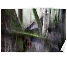 Forest #3 - Tahune Forest Reserve, Tasmania Poster