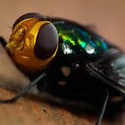 Fly Macro IX - Front View  by kutayk