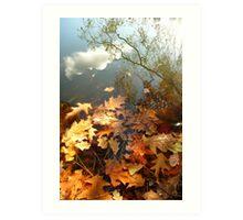 Autumnal Leaves Art Print