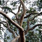 My favourite tree by Deanne Chiu