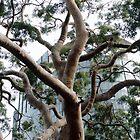 My favourite tree by Deanne Chiu