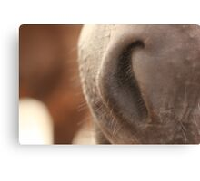 Soft Horse Nose - perfect for kissing Canvas Print