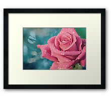 New Year's Rose Framed Print