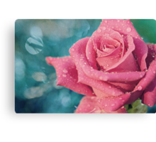 New Year's Rose Canvas Print