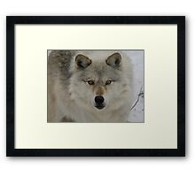 Look Into The Soul Of The Forest  Framed Print