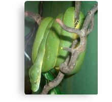 Snake in a tree Canvas Print