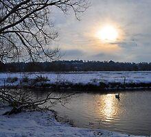 Winter Sun by Rob-Yates