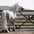 Over the gate - Murthwaite Windrush by Fleur Hallam