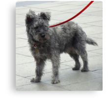 Shaggy Dog with Red Lead Canvas Print