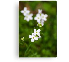 Cuckoo Flowers Canvas Print