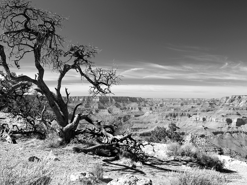 Desert view tree , Grand Canyon by Alex Cassels