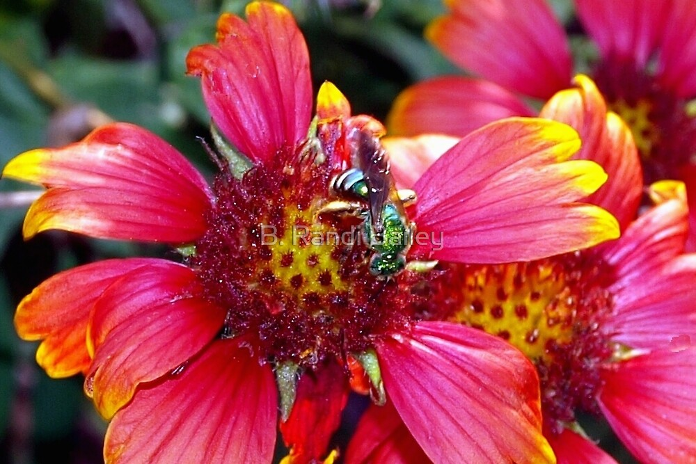 Green bee on red and yellow flower by ♥⊱ B. Randi Bailey