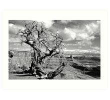 Twisted Juniper at Dead Horse Point Art Print