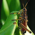 Lubber Grasshopper II by Ostar-Digital