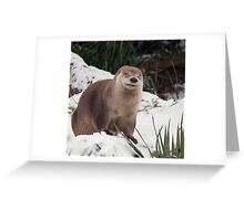 What's so funny? Greeting Card
