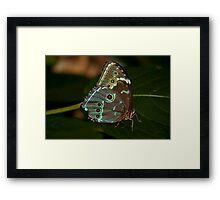 Blue Morph! Framed Print