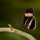 Eyes wings and legs! by vasu