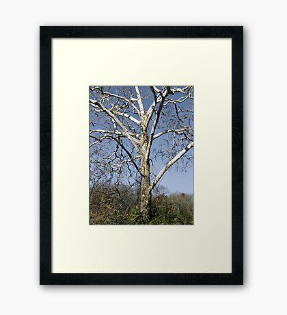 Leafless Tree Framed Print